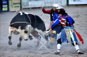 clowns riding a bull